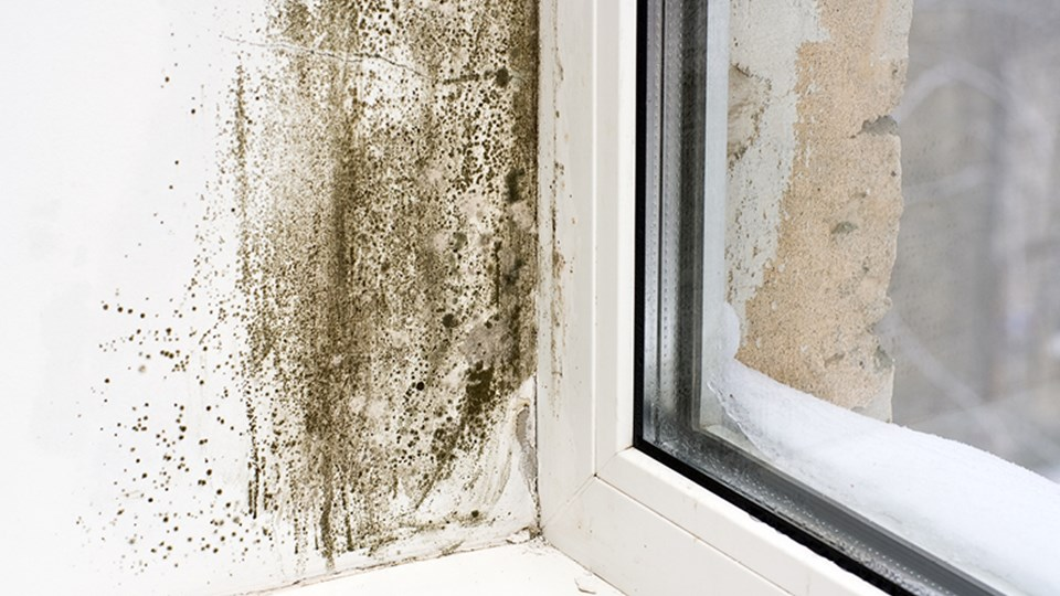 How To Get Rid of Mould Around Your Windows thumbnail